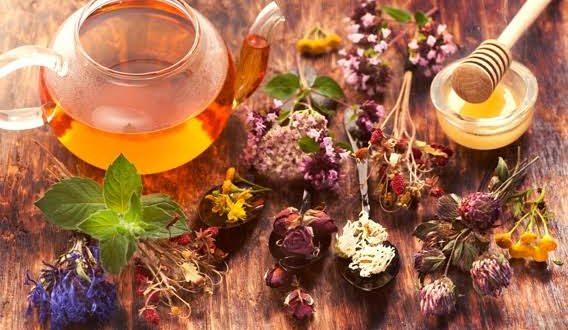 Tıbbi Bitkiler ve Tüm Özellikleri