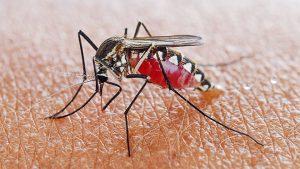 sivri sinek ilaçlaması, sivri sinek ilaçlama işlemi